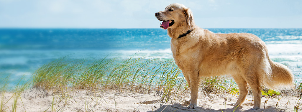 Home Page Banner - Dog on beach