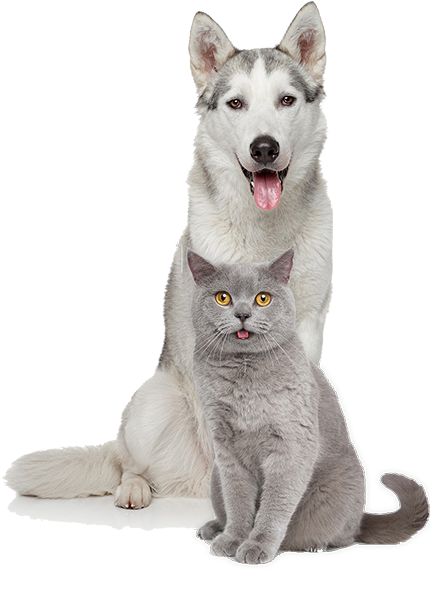 Limited-Cat-And_Dog